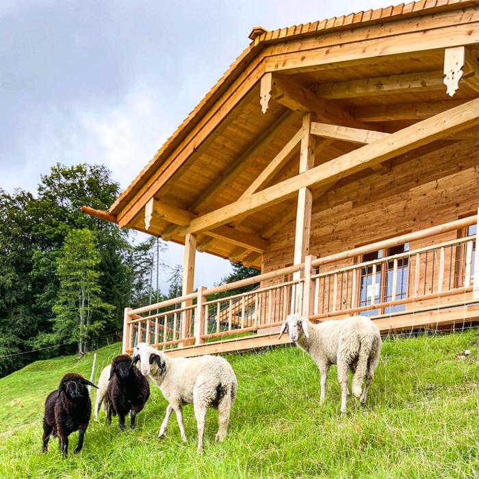 Almdorf Vorderbrand im Sommer mit Schafen im Vordergrund